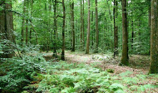 Fiscalité Bois Et Forêts - Bois Et For u00eats Un Placement  u00c0 L'abri Des Soucis Immonot com